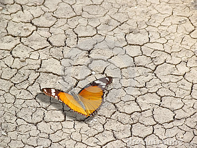 Butterfly on cracked earth, life and death
