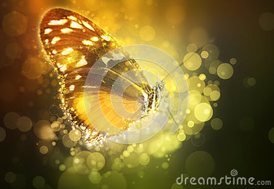 Butterfly in a dream Stock Photo