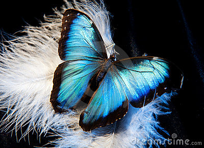 Butterfly and feather