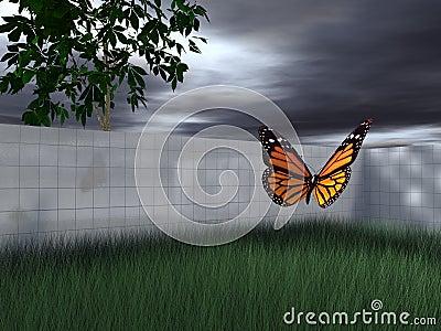 Butterfly in fenced-in yard