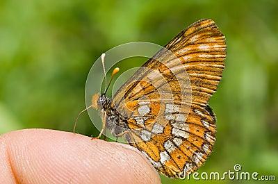 Butterfly on Finger 2