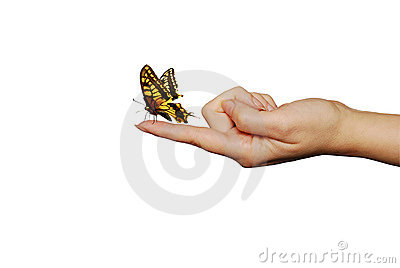 Butterfly On A Finger Royalty Free Stock Image - Image: 8935846
