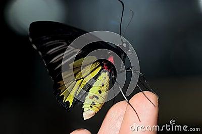 Butterfly on fingers