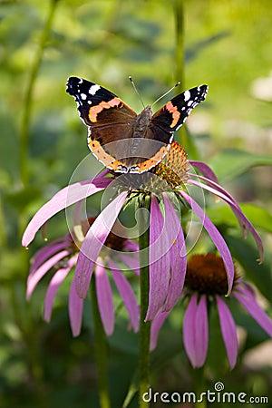 Butterfly in a flower.