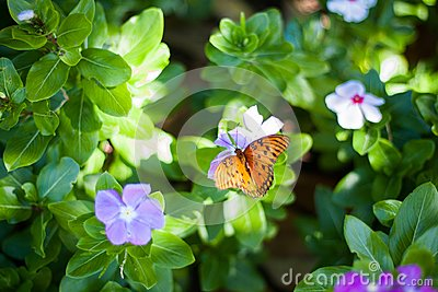 Butterfly On Flower Free Public Domain Cc0 Image