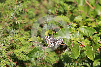 Butterfly flying on the leaves