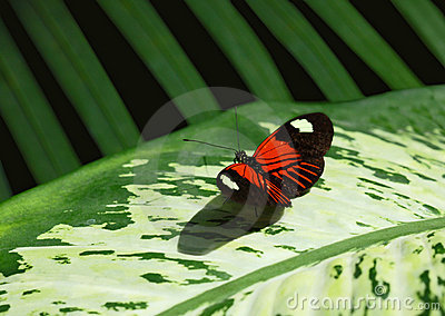 Butterfly and Foliage