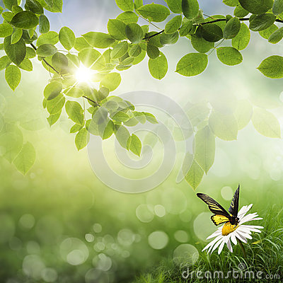 Free Butterfly, Fresh Spring Bokeh Background Stock Images - 27759234