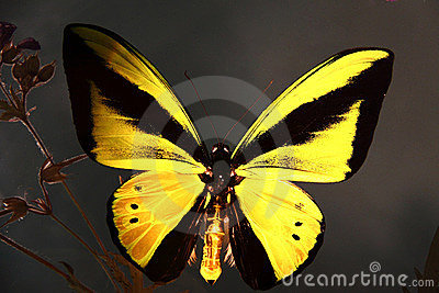 Butterfly on glass
