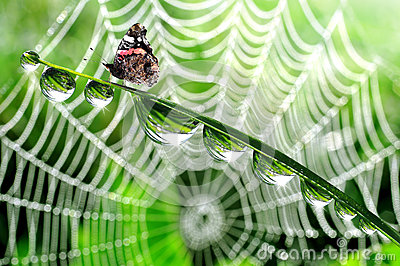 Butterfly  on grass with dew drops