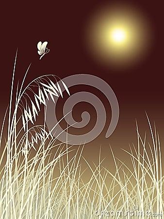 Butterfly grass in moon night pattern