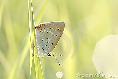 Butterfly on a grass in the sun rays