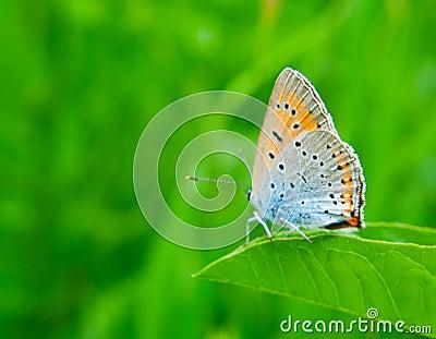 Butterfly on green grass
