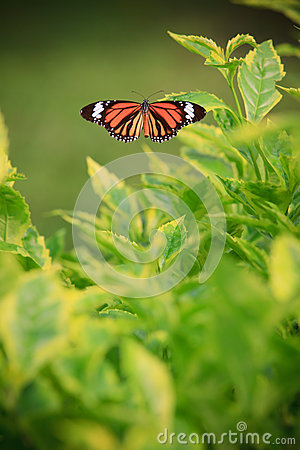 Butterfly on green tree