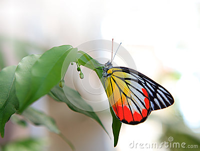 Butterfly on green tree in home garden
