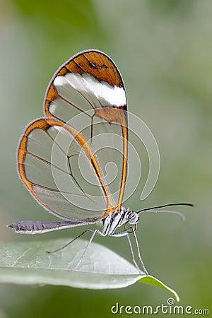 Butterfly - Greta Oto