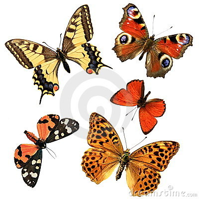 Free Butterfly Group Stock Photography - 5258132