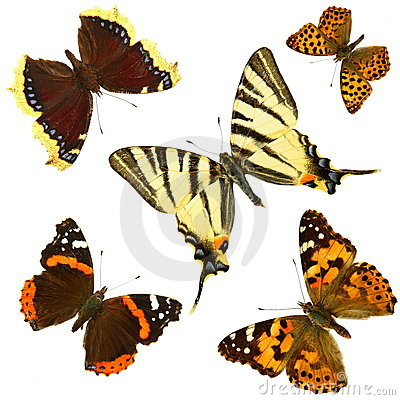 Free Butterfly Group Royalty Free Stock Photos - 5343898