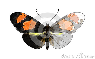 Butterfly Heliconius.