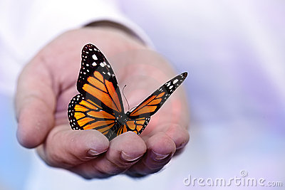 Butterfly holding in hand