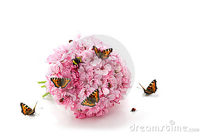 Butterfly, ladybirds and bumblebee on pink flowers