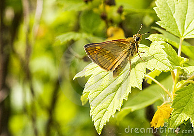 butterfly  on  leaf in a nature