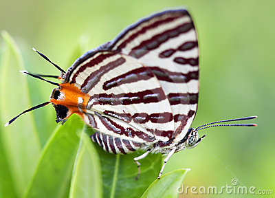 Butterfly on a leaves
