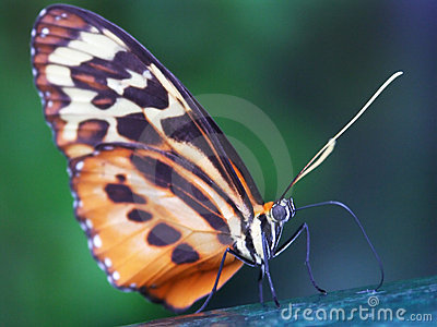 Butterfly macro #2
