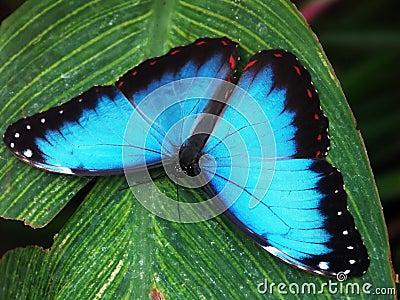 Butterfly macro #3