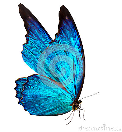 Free Butterfly Macro Background Royalty Free Stock Photos - 35731878