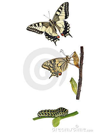 Free Butterfly Metamorphosis Royalty Free Stock Images - 23088109