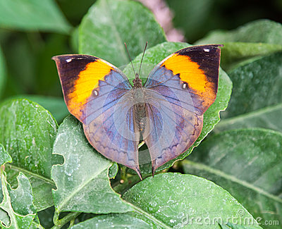 Butterfly Natural History Museum London Engaldn