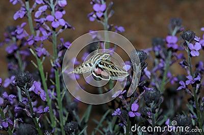 Butterfly near purple flowers