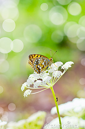 Free Butterfly On A Flower Royalty Free Stock Photos - 23066558