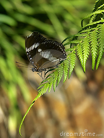 Free Butterfly On Fern Royalty Free Stock Photography - 859617