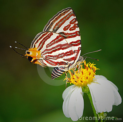 Free Butterfly On Flower Royalty Free Stock Photo - 18758545