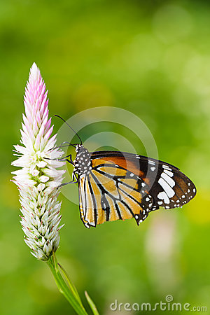 Free Butterfly On Flower Stock Images - 26401554