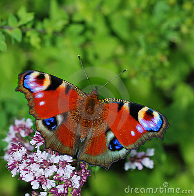 Free Butterfly On Flower Stock Photos - 3145573