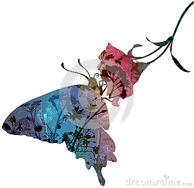 Free Butterfly On Flower Royalty Free Stock Photo - 37779395