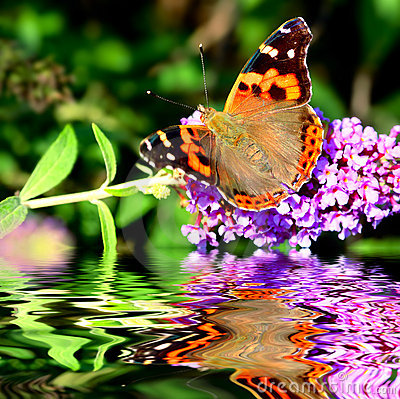 Free Butterfly On Flower Stock Image - 6847601