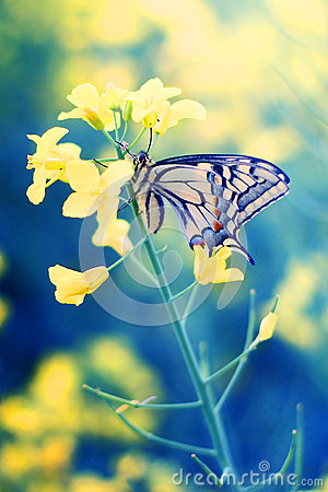 Free Butterfly On Flower Stock Photo - 91069650