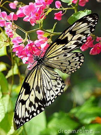 Free Butterfly On Flowers Stock Photography - 18184452