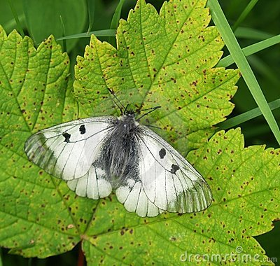 Free Butterfly On Leaf Stock Photography - 5598862
