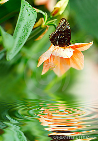 Free Butterfly On The Flower Stock Image - 8244811
