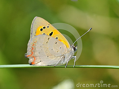 Butterfly outdoor