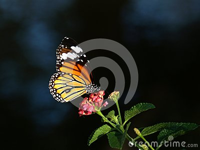 Butterfly over a flower