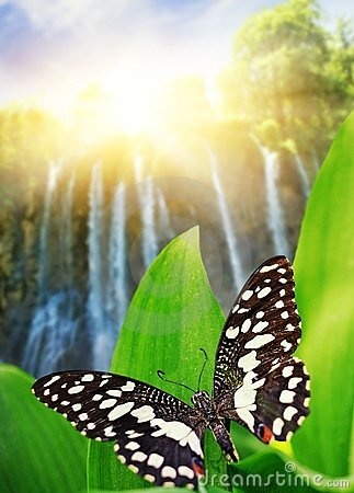 Butterfly over waterfall in wild forest
