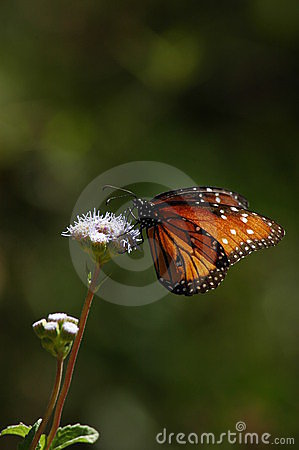 Free Butterfly Perched On Wild Flower Vertical Stock Photo - 278470