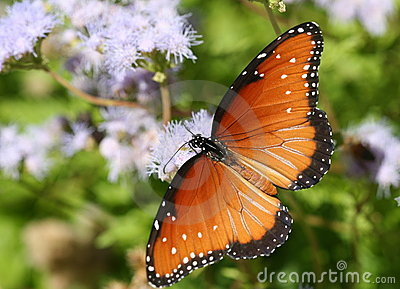 Butterfly among purple blooms