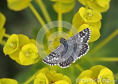 Butterfly relaxing